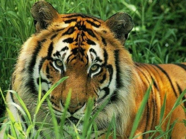 من أجمل الصور الملتقطة للحيوانات